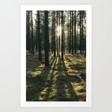 Sunlight through a dense forest. Norfolk, UK. Art Print