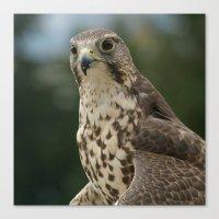 hawk Canvas Prints featuring Hawk by Herzensdinge