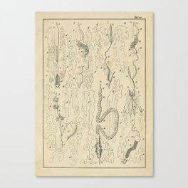 Microscopic Biology Canvas Print