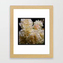 white roses and a light pink bud (square) Framed Art Print