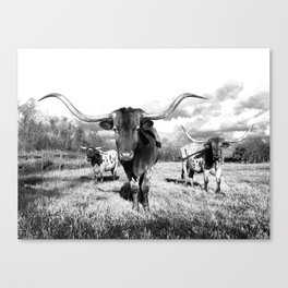 Longhorn Cattle Black and White Highland Cows  Canvas Print