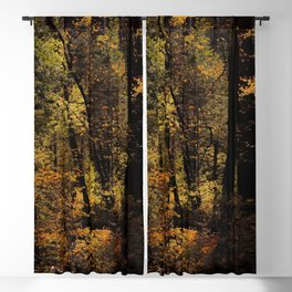 Autumn tree in the forest at Yosemite national park California USA Blackout Curtain