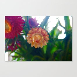 Yellow Strawflower Canvas Print