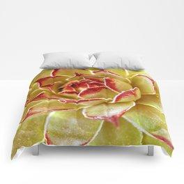 Suculenta Comforters