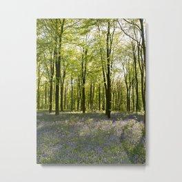 Micheldever Woods Metal Print