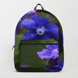 Omphalodes verna - JUSTART © Backpack