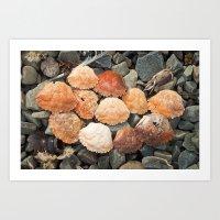 Crab Shells Art Print