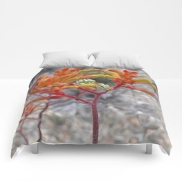 Orange Kangaroo Paw Flowers Comforters