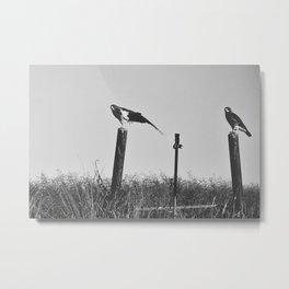 Hawks on the prairie Metal Print