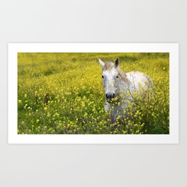 White Horse in a Yellow Pasture Art Print