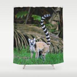 Madagascar's Exotic Ringtail Lemur Shower Curtain