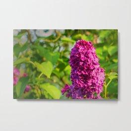 """PANTONE Rhodamine Red C"" Lilac Metal Print"