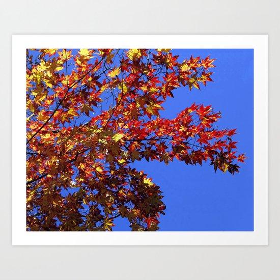 Japanese Maple 2 Art Print