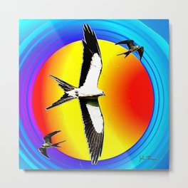 Swallow tailed Kite 2 Metal Print