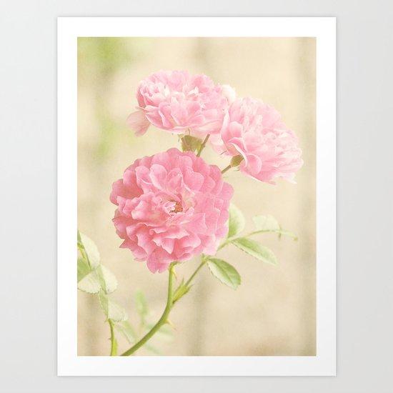 Vintage Pink Ruffled Roses II Art Print