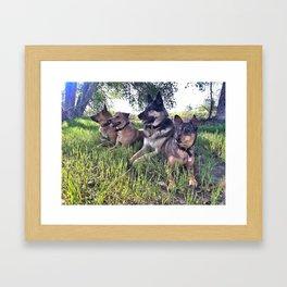 Dog Day Afternoon Framed Art Print