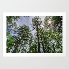 The Pine Barrens - New Jersey Art Print