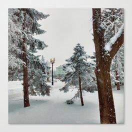 Spruces Canvas Print