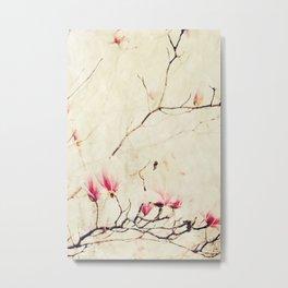 Spring Botanical - Tulip Tree, Magnolia × soulangeana Metal Print