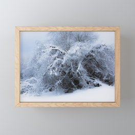 Snow covered branches Winter cold at Creamers Field Fairbanks  Alaska Framed Mini Art Print
