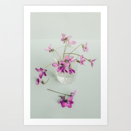 Sweet Violets - Modern Farmhouse Botanical Art Print