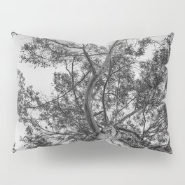 The old eucalyptus tree Pillow Sham