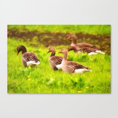 Wild geese in the march Canvas Print