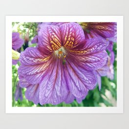 Purple Salpiglossis Floral Art Print
