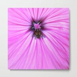 Nectar drunken flower fly Metal Print