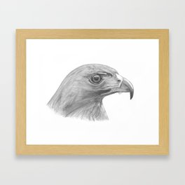 Pencil Drawing of a Hawk Framed Art Print