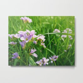 spring flowers meadow Metal Print