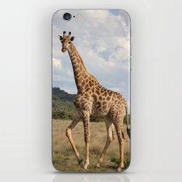 Giraffe_front iPhone Skin
