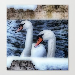 Two swans in the snow Canvas Print