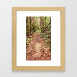 On the Appalachian Forest Trail Framed Art Print