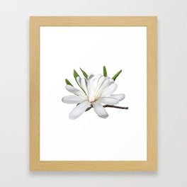 The Flower is the Star (Magnolia) Framed Art Print