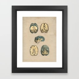 Human Brain Anatomy 1841 Print Framed Art Print