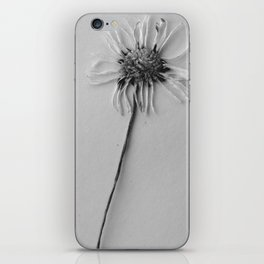 black and white daisy iPhone Skin