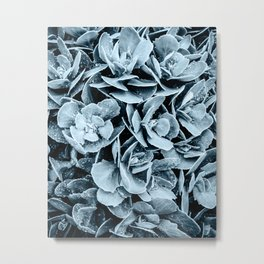 Sedum After the Rain - Blue Metal Print