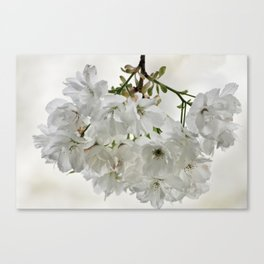 SPRING BLOSSOMS - IN WHITE - IN MEMORY OF MACKENZIE Canvas Print