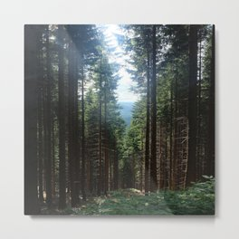 Forest in a Raw Summer Metal Print