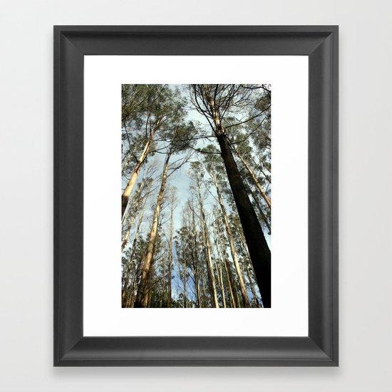 Tall Timbers Framed Art Print