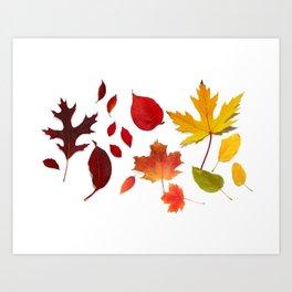 Autumn Rainbow, Fallen Leaves Art Print