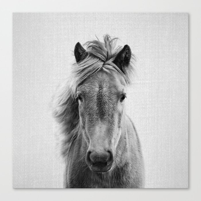 Wild Horse - Black & White Canvas Print