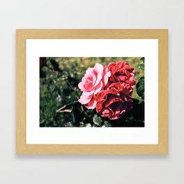 Flowers/ Rome Framed Art Print