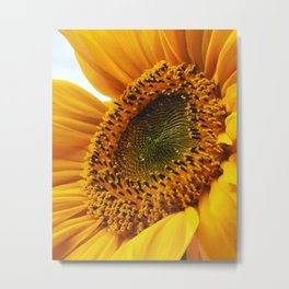 Sunflower and drops Metal Print