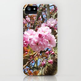 Cheery flowers and birches iPhone Case