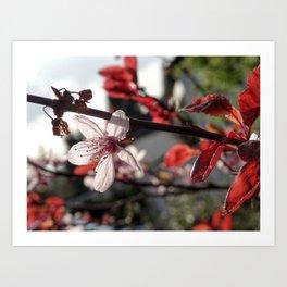 Flowering Plum Art Print