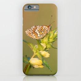 Knapweed Fritillary iPhone Case