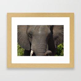 Elephant Detail Framed Art Print