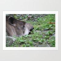 Sleeping Tapir  Art Print